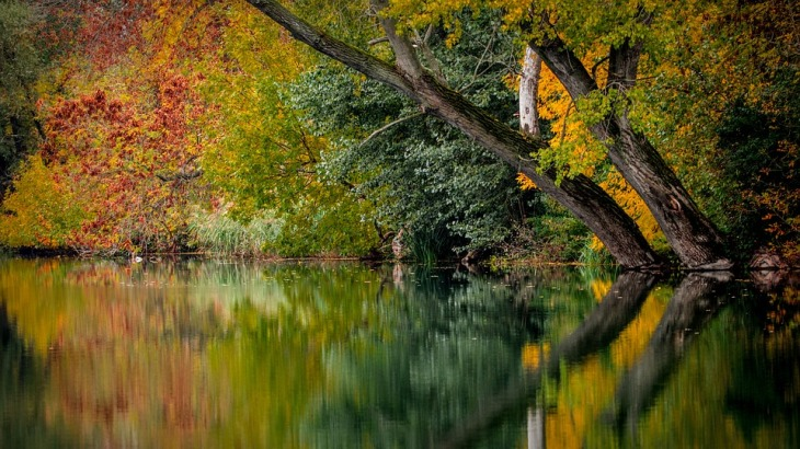 autumn-994897_960_720-cores