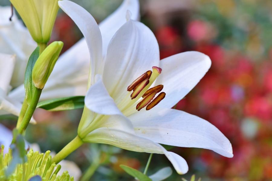 Prosperidade e Abundância – VisãoSistêmica
